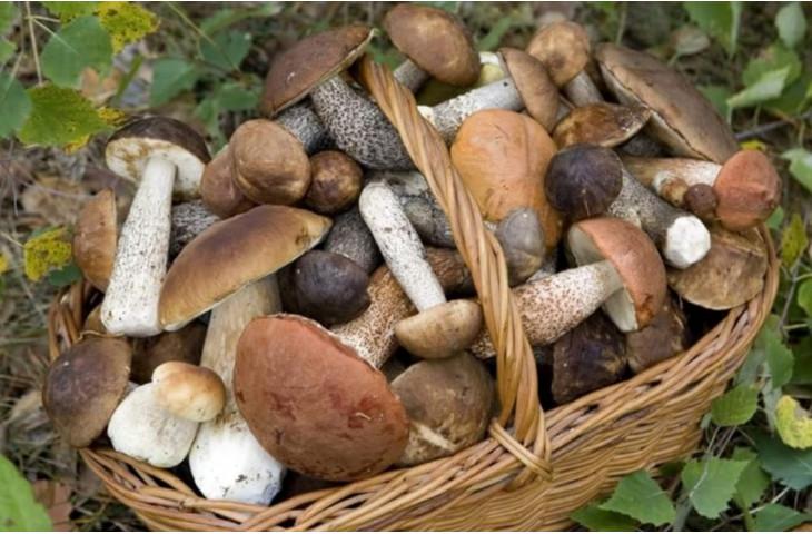 Venerdi 18 ottobre serata funghi